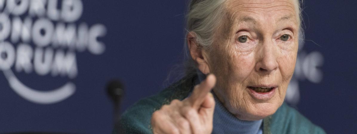 Jane Goodall le 22 janvier 2020 au Forum économique de Davos, en Suisse, durantune conférence de presse