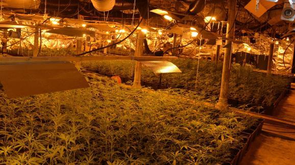 Image communiquée par la Direction interrégionale de la police judiciaire de Lille montrant une plantation de cannabis.