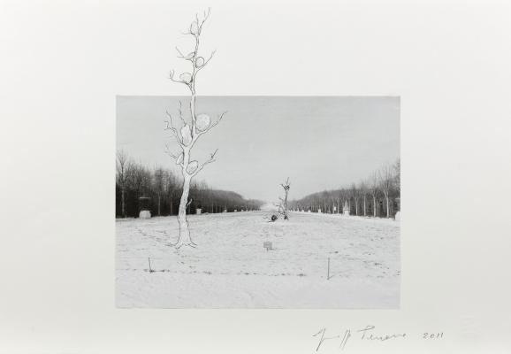 """Giuseppe Penone, \""""Progetto per Versailles\"""""""