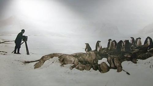 Image de couverture - Des explorations polaires de Charcot aux chercheurs d'aujourd'hui : cap sur la biodiversité au Muséum du Havre