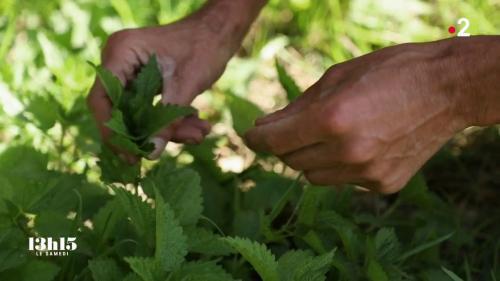 VIDEO. Alimentation : 80% des 6 000 plantes sauvages qui poussent en France sont comestibles