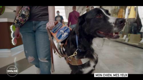 """VIDEO. """"J'ai ressenti comme une sorte de connexion"""" : Romane raconte sa rencontre magique avec le chien guide Nitro"""