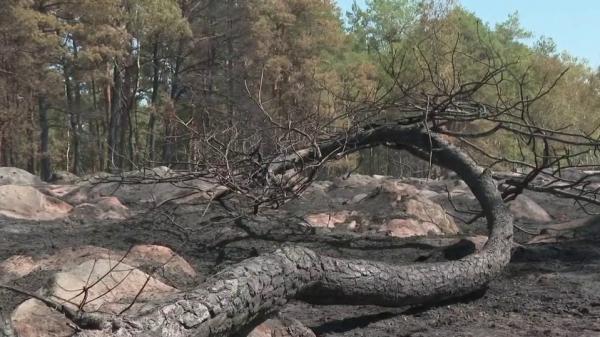 Fontainebleau : la forêt sous surveillance