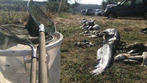 Ardennes : trois tonnes de poissons morts à cause d'une pollution