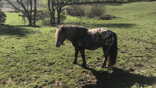 Un nouveau cheval retrouvé mort, l'oreille coupée, en Saône-et-Loire