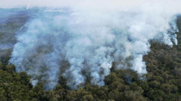 Biodiversité : des incendies ravagent le Pantanal, une zone humide au Brésil