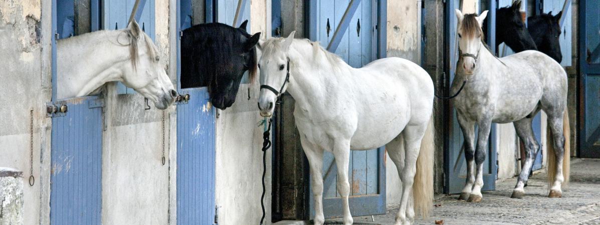 Des chevaux au centre équestre Jean Claude Adelin à Tarbes (Hautes-Pyrénées), le 9 juillet 2020.