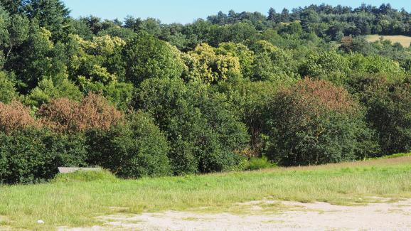 Des arbres rougeâtres, quelques jours après un ball-trap, le 22 juin 2018 à Chambles (Loire).