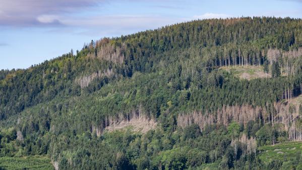Sécheresse : les forêts françaises, en souffrance, perdent leur valeur