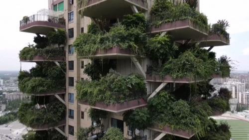 VIDEO. En Chine, des immeubles végétalisés hors de contrôle