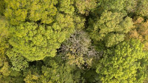 Réchauffement climatique : il faudra planter un arbre par habitant pendant trente ans pour protéger les forêts françaises, prévient un rapport