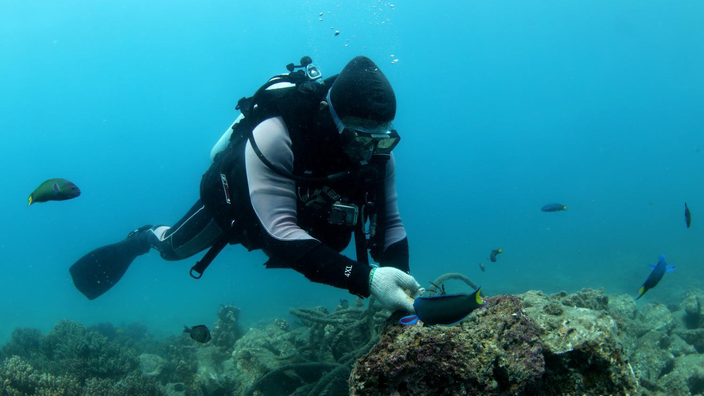 Nouveau monde. Pour communiquer sous l'eau, bientôt du Wi-Fi sous-marin ?