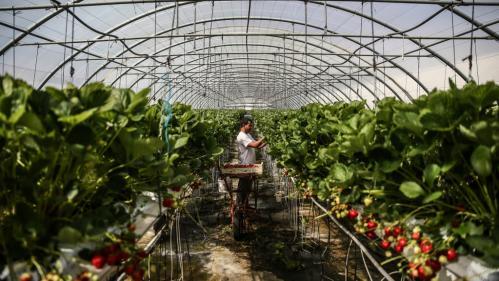 Saisonniers agricoles : l'exonération de charges patronales reconduite jusqu'en 2022