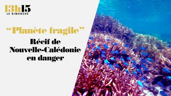 """""""13h15 le dimanche"""". """"Planète fragile"""". Récif de Nouvelle-Calédonie en danger"""