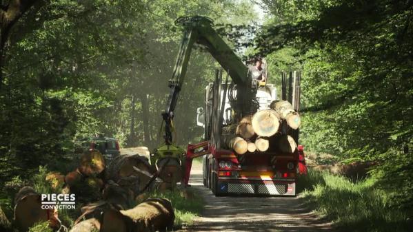 """Dans les forêts françaises se joue une guerre commerciale dont le roi des arbres, le chêne, est l'enjeu. Un quart de la production brute est désormais exporté vers l'Asie. Les nouveaux acheteurs, en majorité chinois, font monter les prix, et les scieries françaises peinent à s'aligner. Extrait de """"Pièces à conviction"""" du 28octobre 2020."""