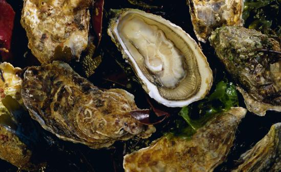 le commerce des huîtres en danger