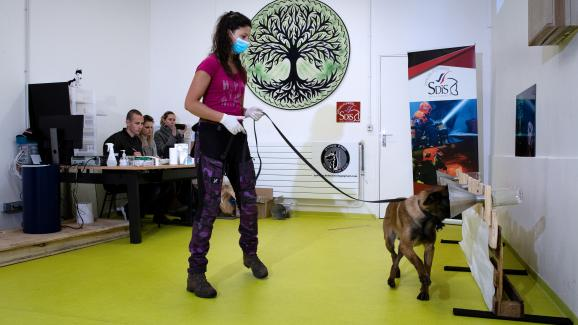 May 13, 2020 at the Maison-Alfort veterinary school.  A woman teaches her dog to detect material infected with Covid-19.  Thanks to their highly developed sense of smell, these sniffer dogs achieve feats.
