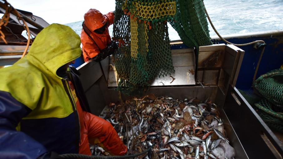 Brexit : les pêcheurs entre soulagement et inquiétude