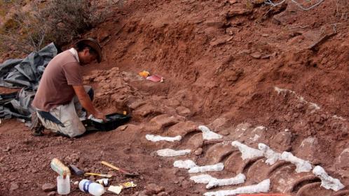 VIDEO. Le plus grand dinosaure jamais découvert a-t-il été mis au jour en Argentine ?
