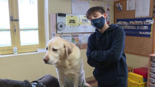 Plusieurs fois par semaine dans le Tarn, deux chiens dressés à la médiation aident les enfants autistes à apprendre en classe au sein de l'hôpital de jour. La présence de ces chiens auprès des maîtresses auraient de nombreux effets bénéfiques sur les enfants.#IlsOntLaSolution