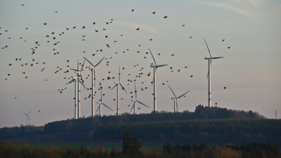 Etats-Unis : un million d'oiseaux tués par des éoliennes chaque année