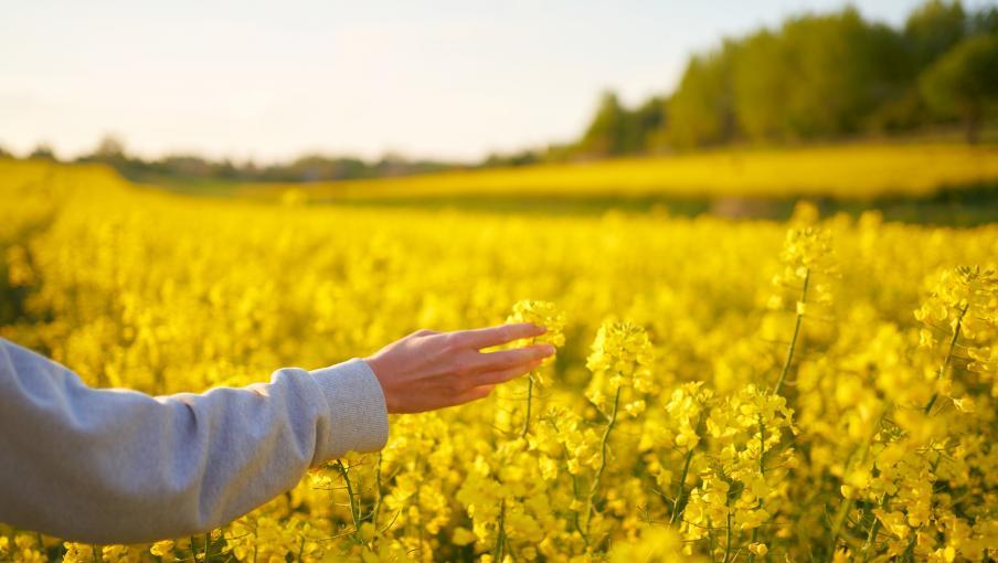 """Question de société. Jean Viard : """"Il faut en France une grande politique agricole, parce que c'est un projet de toute la société"""""""