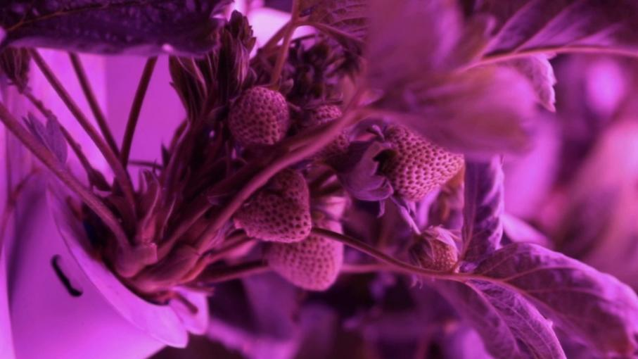 Alimentation : une production de fruits et légumes futuriste dans des containers à la Courneuve