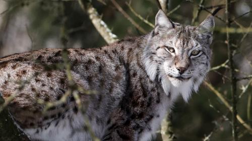 Plus de 2 400 espèces sont menacées en France. La biodiversité est en souffrance dans notre pays.
