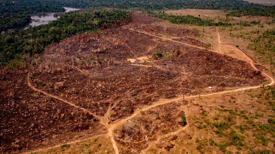 franceinfo junior. Des questions sur l'Amazonie et la déforestation