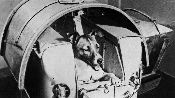 Η Λάικα, ο πρώτος αστροναύτης ζώων, εκτοξεύτηκε σε τροχιά γύρω από τη Γη στο Spotnik 2 στις 3 Νοεμβρίου 1957.  Ο σκύλος πέθανε 7 ώρες μετά την έναρξη της κάψουλας.  & Nbsp;