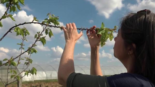 Intempéries : des agriculteurs à la recherche de plantes résistantes aux aléas climatiques