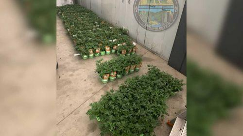 Puy-de-Dôme : les gendarmes saisissent des plants étiquetés « cannabis » dans une grande surface