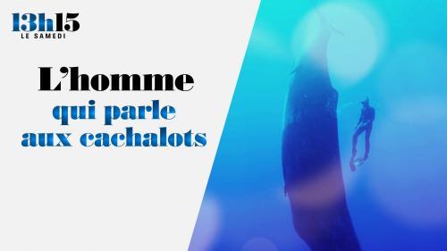 Docteur en océanographie de renom, François Sarano a passé treize ans aux côtés du commandant Jacques-Yves Cousteau comme conseiller scientifique et chef de mission.Mexique, île Maurice, Méditerranée… au cœur des mers avec ce défenseur de l'environnement et des animaux marins dans ses plongées fantastiques. Portrait.