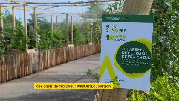 Pour lutter contre la chaleur parfois intenable l'été, la mairie de Strasbourg installe des îlots végétalisés sur plusieurs places de la cité alsacienne.#IlsOntLaSolution