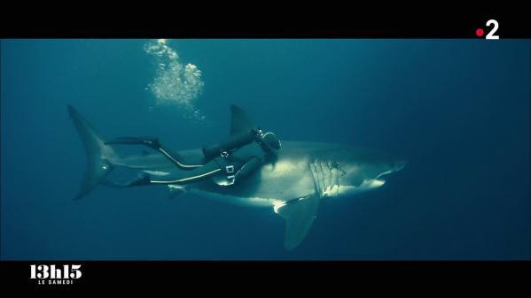 """Le film de Steven Spielberg a causé un """"tort infini"""" aux squales, selon l'ancien chef de mission du commandant Cousteau. Alors, il est allé plonger avec un énorme représentant d'une espèce réputée """"mangeuse d'hommes"""" pour corriger cette triste image… Extrait du magazine """"13h15 le samedi"""" du 19juin2021."""