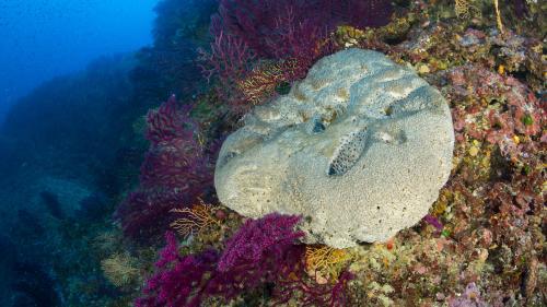 Des structures d'éponge découvertes au Canada sont peut-être la plus vieille forme de vie animale sur Terre