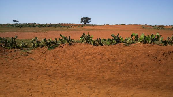 Sécheresse à Madagascar : les terres du sud ne permettent plus de nourrir les villages