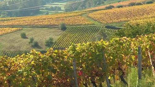 Les équipes de France Télévisions vous emmènent du côté de la Bourgogne, dans les vignobles du Mâconnais où les randonneurs se retrouvent pour admirer les paysages aux côtés des viticulteurs.
