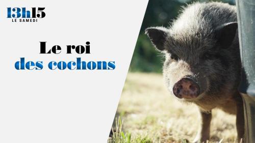 A 31ans, Astrid a quitté son poste dans les ressources humaines pour élever des cochons. Six ans plus tard, elle est à la tête d'un cheptel de près de 200 bêtes d'une race très spéciale, le mangalitza. Il donne un jambon unique au monde...