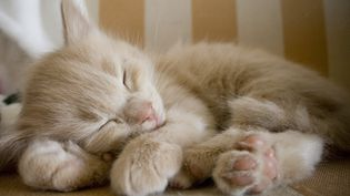 Les Suisses s'interrogent sur la politique à mener pour contrôler la surpopulation de chats. (SANNA PUDAS / FLICKR RF)