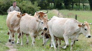 Un éleveur avec ses vaches dans un champ. (FRANK PERRY / AFP)