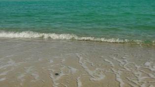 Corse : les côtes menacées par une pollution aux hydrocarbures (Capture d'écran France 2)