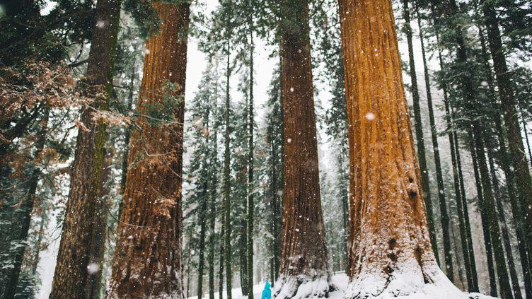 Comment déterminer l'âge d'un arbre ? Pour les arbres historiques, mieux vaut faire appel aux services spécialisés et associations de protection du patrimoine arboré. (PETER AMEND / IMAGE SOURCE / GETTY IMAGES)