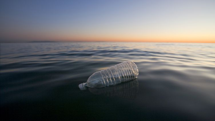 Dans l'océan Pacifique, au large des côtes californiennes. (ECO IMAGES / UNIVERSAL IMAGES GROUP / GETTY)