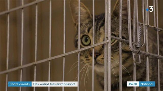 Marseille : la crise sanitaire a fait doubler la population de chats errants