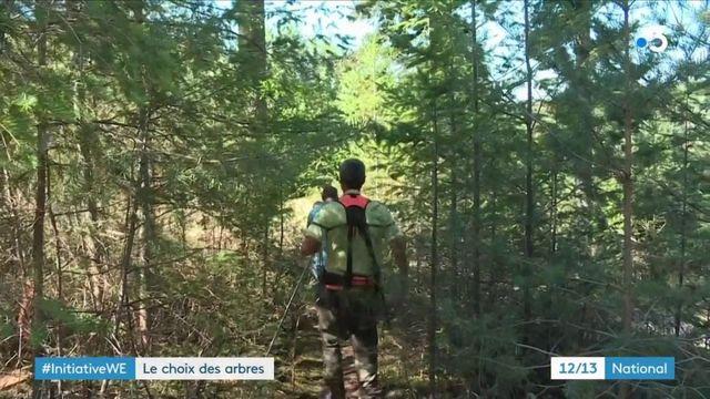 Allier : quand les enfants apprennent à choisir des arbres pour construire leur cantine