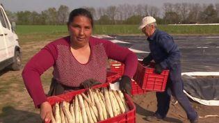 En Alsace, les producteurs d'asperges manque de main-d'œuvre pour la récolte à venir. De l'autre côté du Rhin, les producteurs allemands ont pu faire venir quelque 1 300 saisonniers en provenance de Roumanie. Ils ont fait leur arrivée vendredi 10 avril. (FRANCE 3)