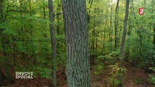 Comment font les arbres pour pousser droit ? (ENVOYÉ SPÉCIAL / FRANCE 2)