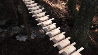 Un xylophone géant, installé en 2011 au cœur d'une forêt de l'île de Kyushu, dans le sud du Japon. (INVISIBLE DESIGN LAB)