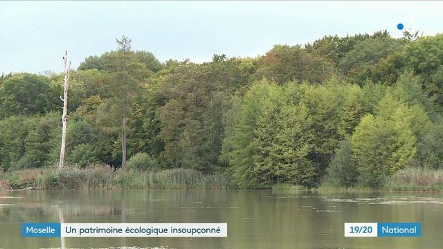 Moselle : un patrimoine écologique insoupçonné